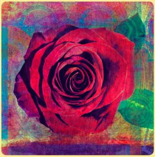 brigid-rose