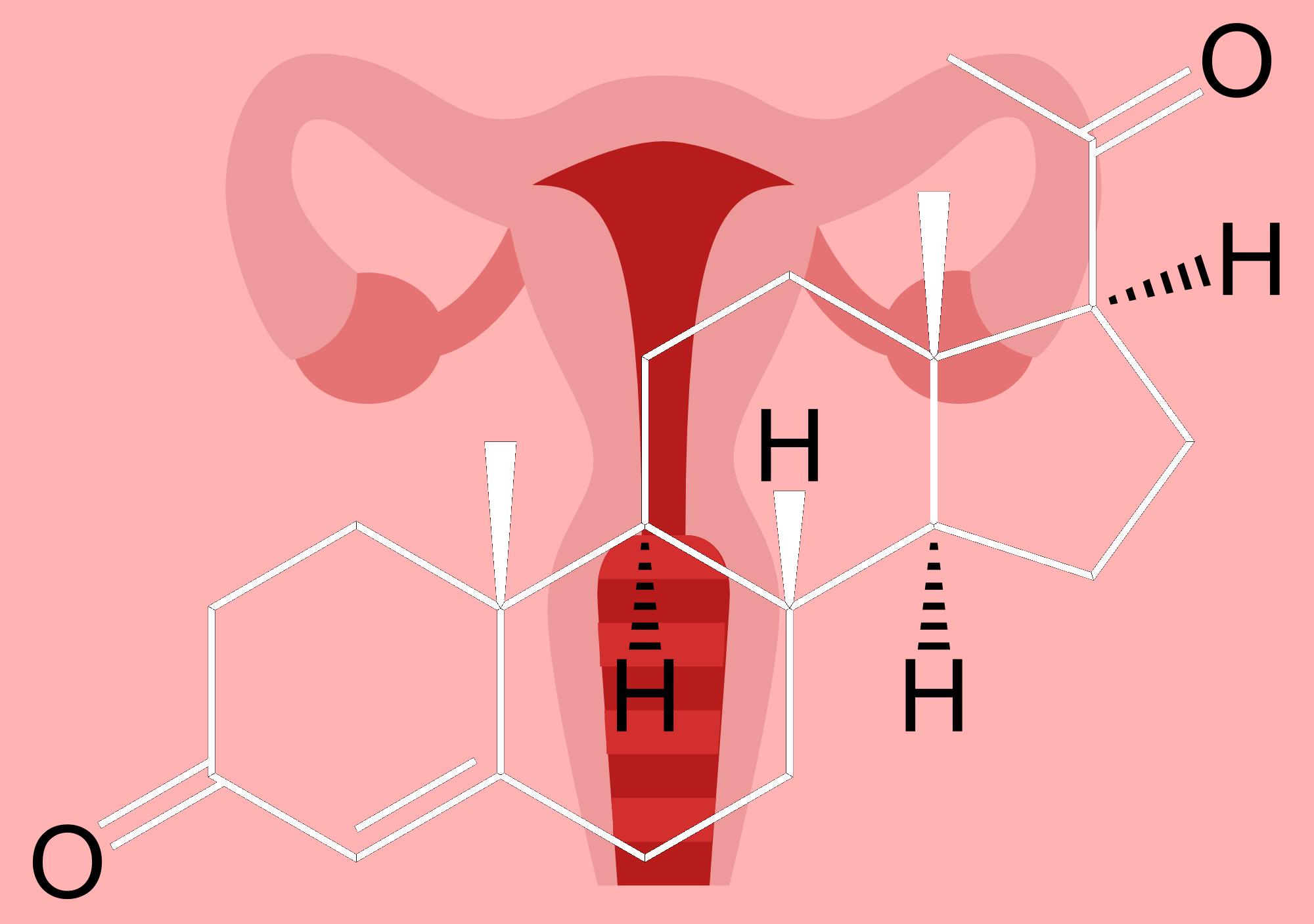 Progesterone-uterus