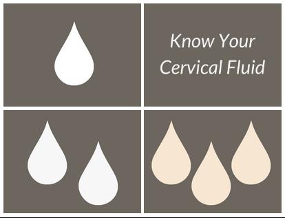 cervical-fluid-infographic-header